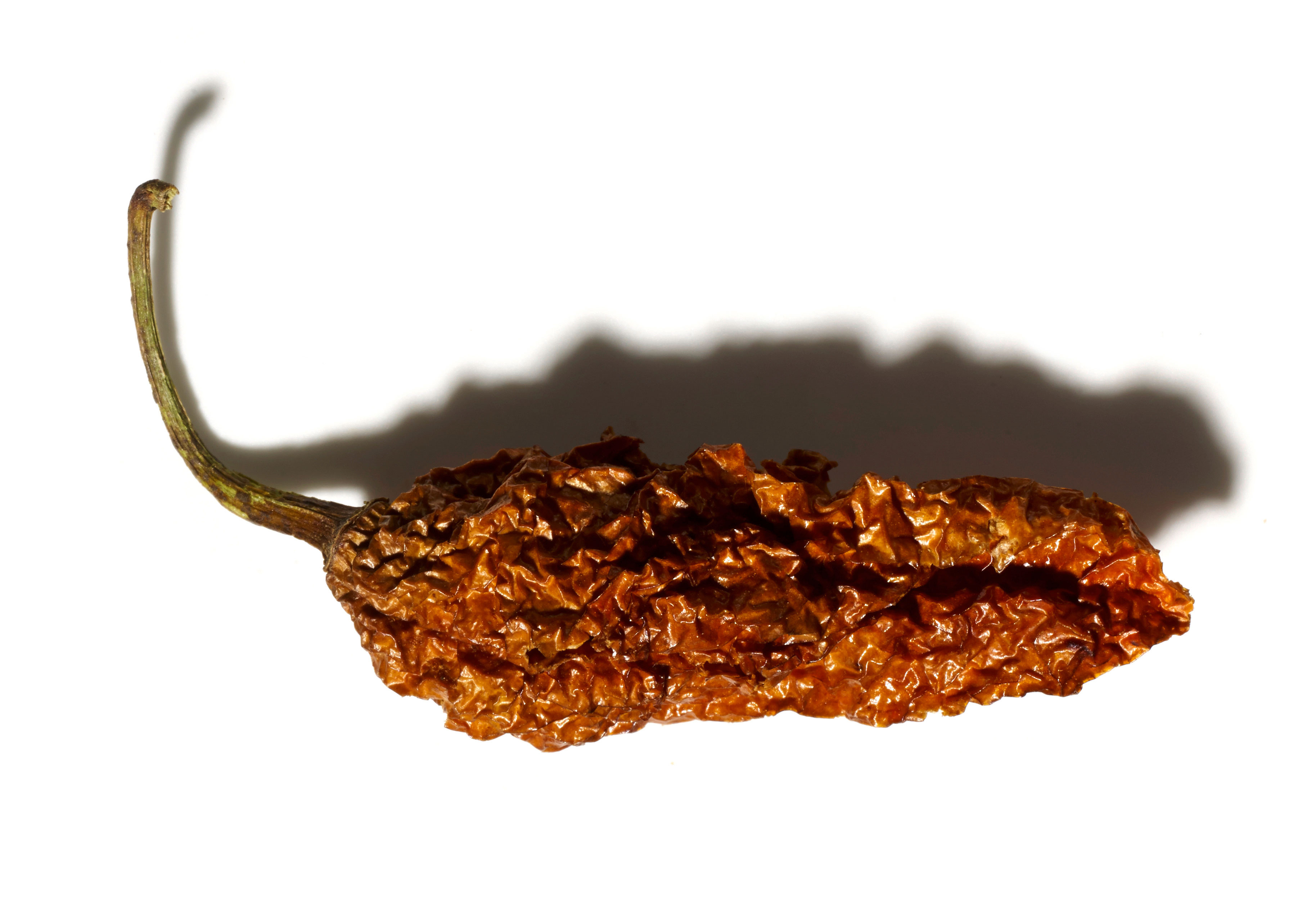 FHM_OCT_Expert_chilli-brown